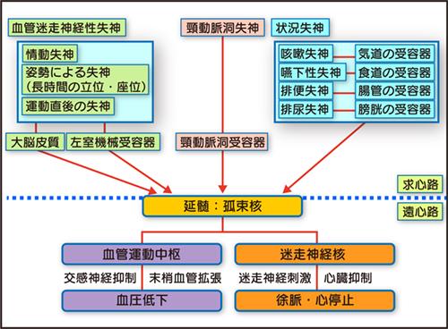 丹野神経図.jpg