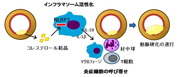 添木図1.jpg