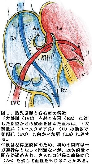 60図1.jpg