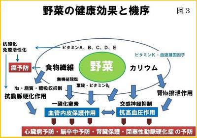 図3野菜の健康効果と機序.JPG