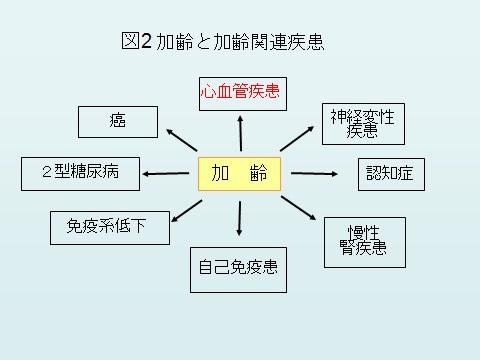 加齢図2.jpg