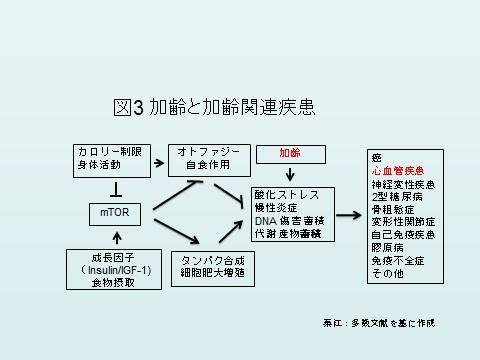 加齢図3.jpg