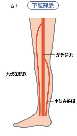 静脈図1.jpg