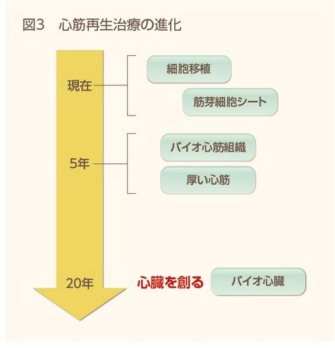 再生医療図3.jpg