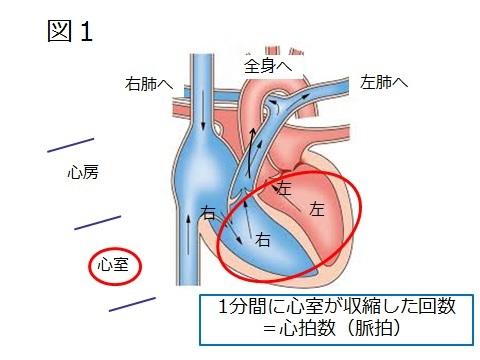 不整脈図1.jpg