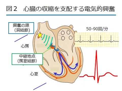 不整脈図2.jpg