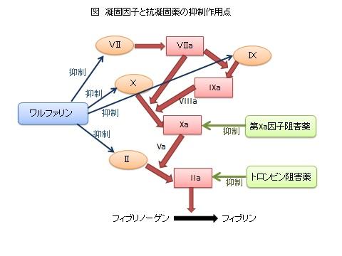 抗凝固剤図.jpg